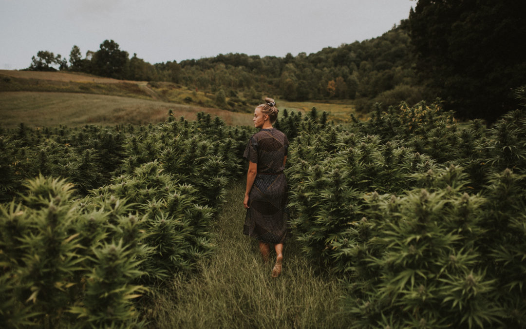 Homestead Hemp grows business while respecting their agricultural roots